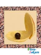 Шоколадная ракушка . Доставка по Киеву и Украине