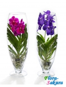 Орхидея Ванда в стекле . Доставка по Киеву и Украине