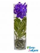 Орхидея Ванда в вазе . Доставка по Киеву и Украине