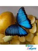 Бабочка Морфо . Доставка по Киеву и Украине