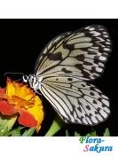 Бабочка Бумажный змей . Доставка по Киеву и Украине