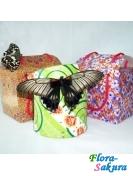 Коробочка под бабочки . Доставка по Киеву и Украине