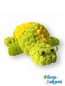Черепаха из цветов . Доставка по Киеву и Украине