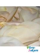 Белые лепестки роз . Доставка по Киеву и Украине