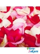 Разноцветные лепестки роз . Доставка по Киеву и Украине
