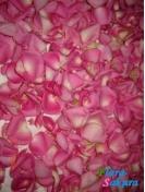 Розовые лепестки роз . Доставка по Киеву и Украине