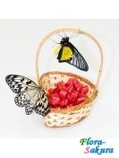 2 живые бабочки в корзинке . Доставка по Киеву и Украине
