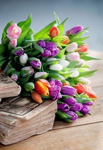 11 тюльпанов любого цвета. Доставка по Киеву и Украине