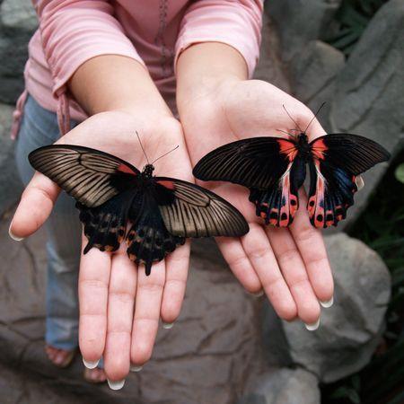 Доставка бабочек по Киеву. Доставка по Киеву и Украине