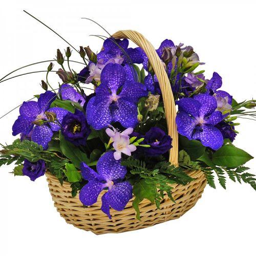 http://flora-sakura.com.ua/user/img/goods/views/view_6532.jpg?v=1.0
